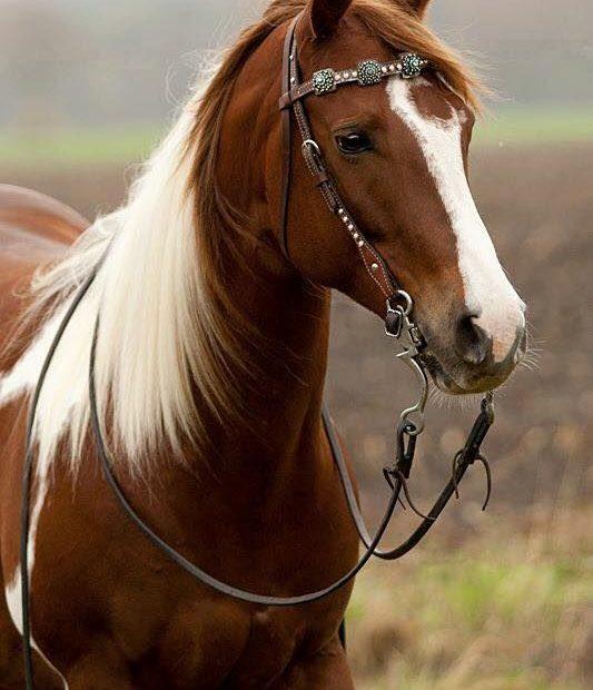 fotos de cavalos (1)