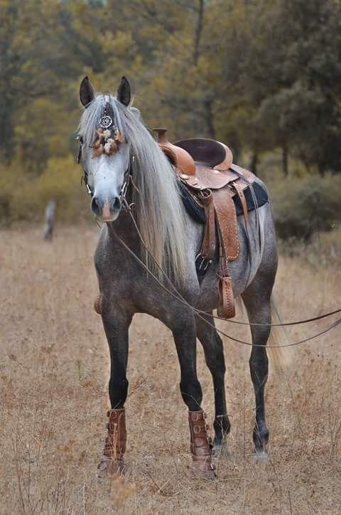 fotos de cavalos para papel de parede de celular  fotos